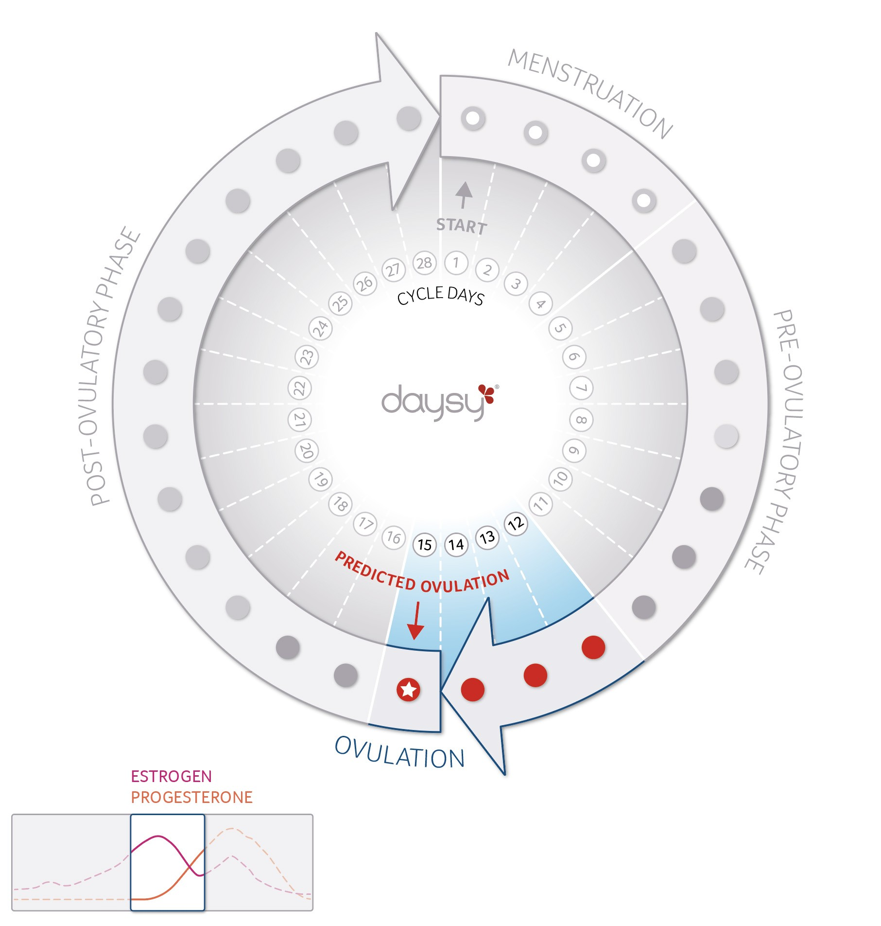 The menstrual cycle: Ovulation